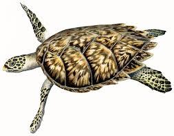 marine turtles species diversity