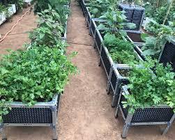 vegetable gardening and balcony vegetable gardening in bangalore