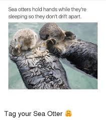 Sea Otter Meme - 25 best memes about sea otter holding hands sea otter holding