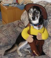 Crazy Halloween Costume 10 Dog Crazy Halloween Costumes Pet Wellbeing