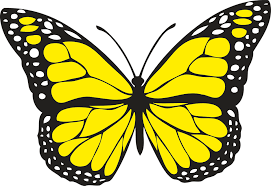 butterfly free vector graphics on pixabay