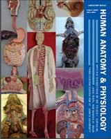 Human Anatomy And Physiology Lab Manual Marieb Anatomy U0026 Physiology Laboratory Manual Package For St John U0027s