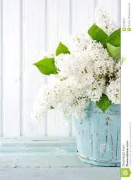 Chic Flower White Lilac Spring Flowers In A Blue Vase Stock Image Image