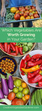 Natural Pesticides For Vegetable Gardens by 7805 Best Images About Gardening Flowers And More On Pinterest