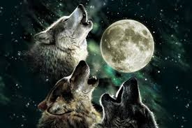 three wolf moon by antonia neshev istyles