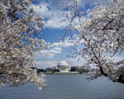 greatest cherry blossom festivals across the country