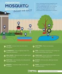 Mosquito Backyard Blog How To Control Mosquitoes In Your Backyard