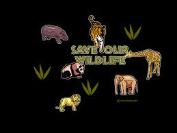 wildlife backgrounds group 64