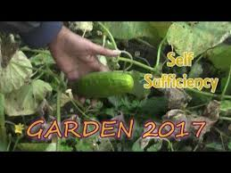 self sufficiency garden 2017 evs youtube