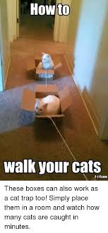 Cat Trap Meme - how to walk your cats these boxes can also work as a cat trap too