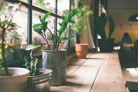 best indoor house plants best indoor house plants a guide to greener room and greener life