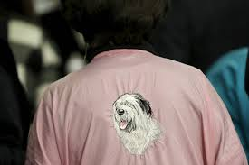 westminster bluetick coonhound 2016 german shorthaired pointer named cj wins westminster dog show