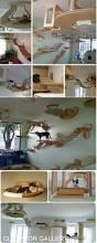 best 25 cat bedroom ideas on pinterest cat decor cat things