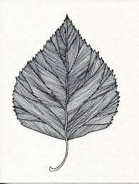 best 25 leaf drawing ideas on pinterest watercolor leaves