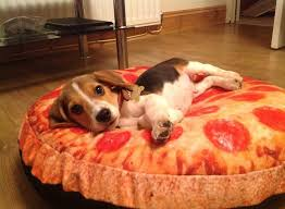 pizza dog bed large pizza dog bed cute ideas pizza dog bed dog bed design ideas