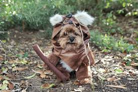 adorable furry reddish brown woodland dog halloween costume