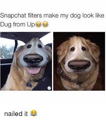 snapchat filters make my dog look like dug from up nailed it
