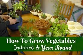 Grow Vegetable Garden by How To Grow Vegetables Indoors Year Round Podcast 28 Mom Prepares
