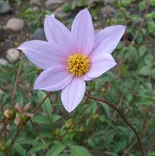 Long Blooming Annual Flowers - flower garden and seasons flowers that bloom all year dengarden