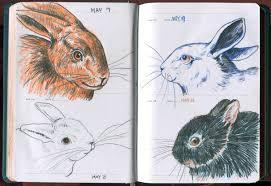 spring rabbits u2013 sketch a day book u2013 kristingjerdset
