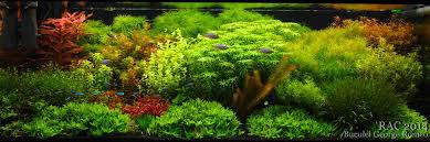 Aquascape Layout Landscaping Oceanmax Aquarium Co Limited