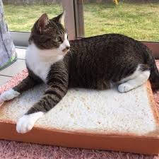 Cats In Dog Beds Introducing The Toast Bread Cat Bed U2013 Pet Clever