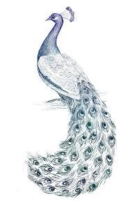 best 25 peacock drawing ideas on pinterest peacock sketch