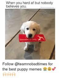 Puppy Memes - 25 best memes about puppy memes puppy memes