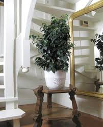 Add House Plants To Home Decor To Improve Air Quality - Home decoration plants