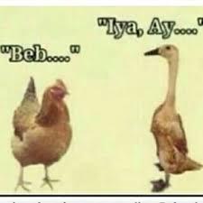 Meme Bebek - wakakak meme hewan koplak humor club iyaa com