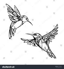 hummingbirds isolated vector stock vector 304750883 shutterstock