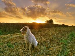 Wallpaper Dog My Free Wallpapers Nature Wallpaper Dog Farm