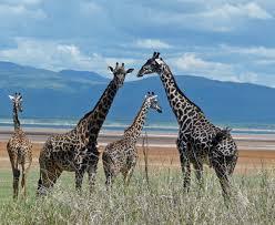 Oregon the traveler images Mammals of africa best photos oregon budget traveler jpg