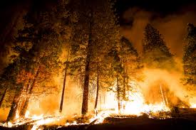 Wildfires Burning In Washington State by Raging Wildfires In Washington Could Spread As State Declares