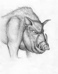 pig wild boar art pencil drawing signed hq a4 print