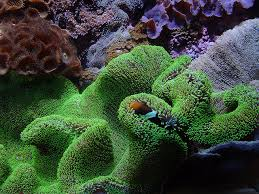 5 marine symbiotic relationships