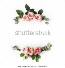 pink and roses pink roses on white background flat stock photo 404969812