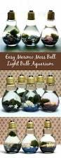 easy diy light bulb aquarium marimo moss ball diy light and marimo