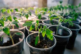 best seed starting containers to use to grow tomato seeds