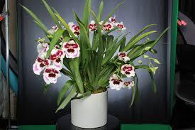 columbia midtown florist manhattan u0027s premier custom flowers