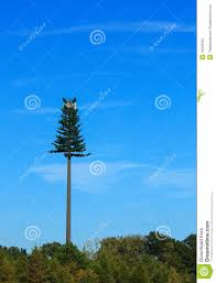 Fake Tree by Fake Tree Cell Tower In Nc Stock Photo Image 45948150