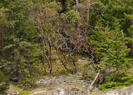 Desolation Sound Map Cruising The Westcoast Vancouver To Alaska Day 2 Pender