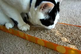 Cardboard Scratchers For Cats Four Paw Savings D I Y Cardboard Cat Scratcher