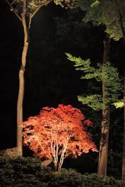 Landscape Lighting Trees All About Landscape Lighting This House