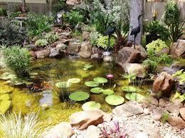 ecosystem koi pond installation austin central texas tx texas