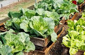 vegetable garden buying guide