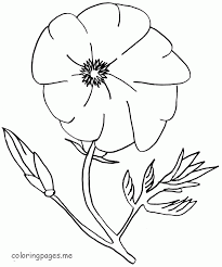 coloring pages poppy flower coloring home