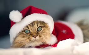cat christmas cat christmas desktop background hd 1920x1200 deskbg