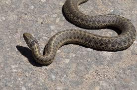 garter snake the squirrel nutwork