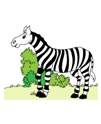 zebras coloring pages kids color print